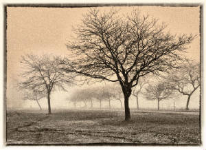 foggymorningtrees-duet.jpg